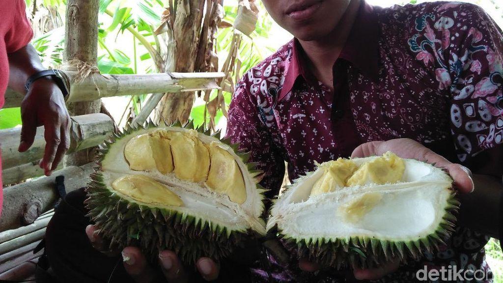 Begini Nikmatnya Durian Criwik dari Rembang yang Bikin Nagih