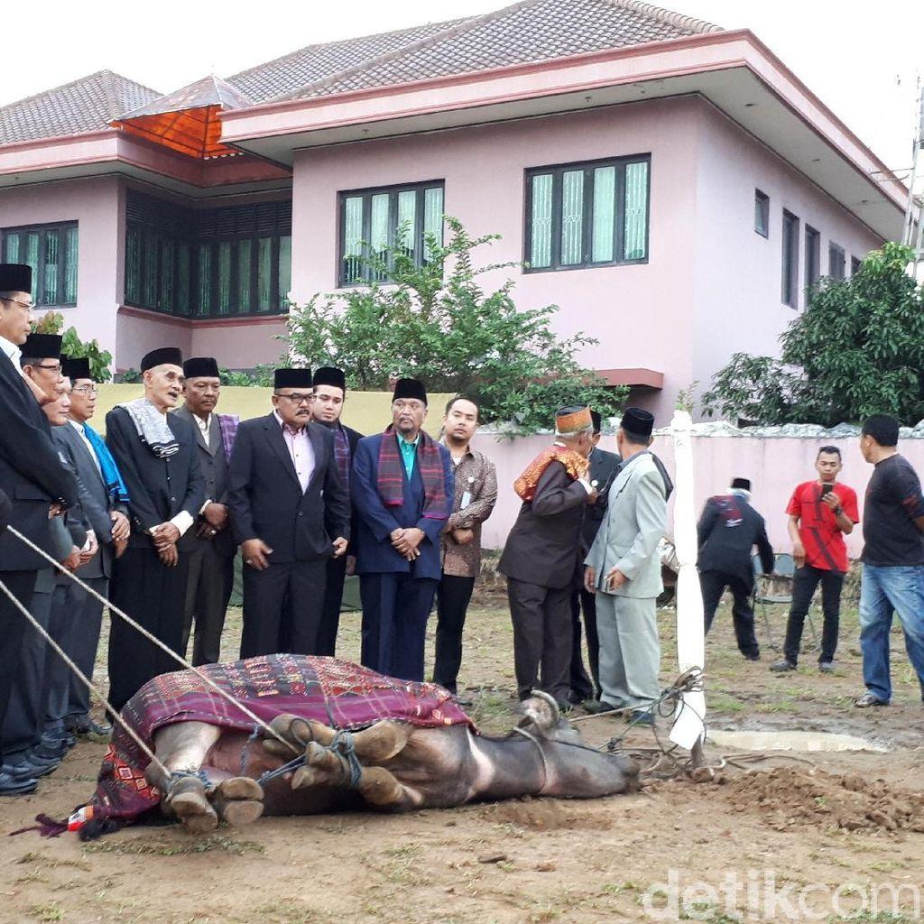 Foto: Prosesi Sembelih Kerbau di Pesta Adat Kahiyang-Bobby