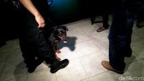 Melihat Aksi Anjing Dora dan Bule Saat Razia Kelab Malam di Bekasi