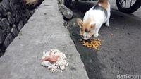Asyiknya Ikut Aksi Beri Makan Komunitas Sukabumi Cat Lover
