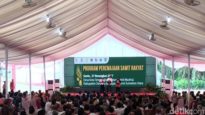 Tanam Ulang 185 Ribu Ha Sawit Rakyat, Jokowi: Pekerjaan Besar