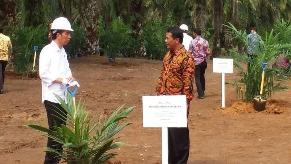 Cerita Jokowi di Depan Petani RI Tak Impor Jagung Lagi