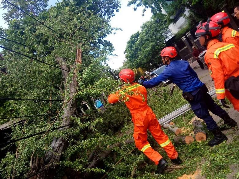 Diterpa Angin Kencang, 3 Pohon di Jakarta Tumbang