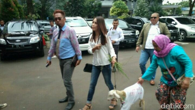Mbeek... Ini Momen Razman-Putri Stagi Gandeng Kambing ke Polda Metro