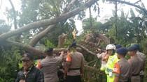 Pohon Tua di Cianjur Tumbang Melintang Jalan