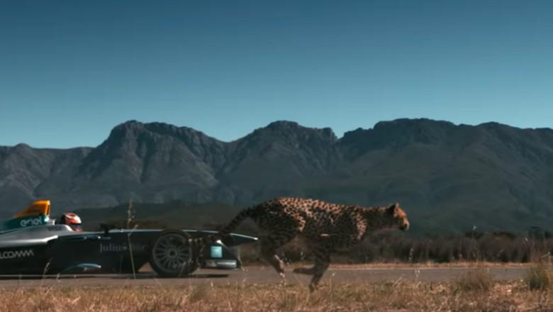 Adu Ngebut Cheetah vs Mobil Balap