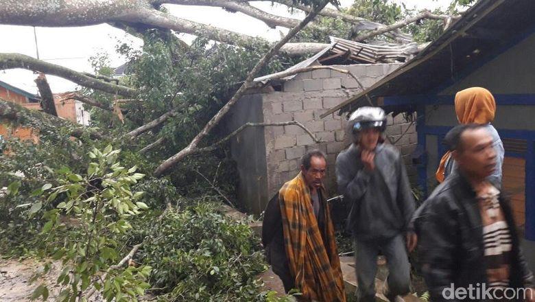 Terancam Pohon Tumbang, Belasan Rumah di Banjarnegara Dikosongkan