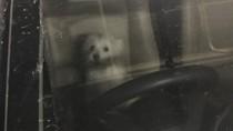 Viral Kisah Anjing Malang Ditinggal Pemilik di Mobil 8 Jam