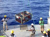 Ini Dia Ikan yang Bisa Hidup di Laut Kedalaman 8.134 meter!