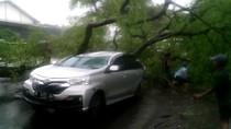 Pohon Asam Setinggi 20 Meter Tumbang dan Timpa Mobil di Pasuruan