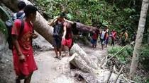 Pilu Warga Sulsel Tandu Jenazah Sejauh 36 Km Tembus Hutan