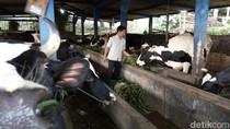 Manfaatkan Biogas, Warga Getasan Tak Pusing Elpiji Langka