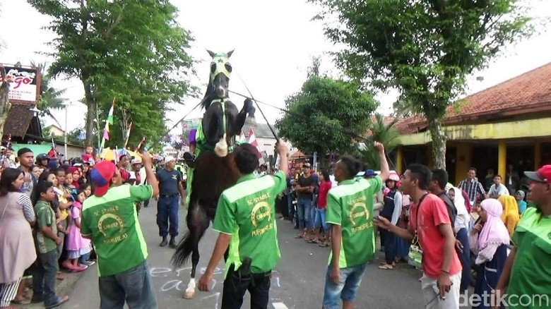 Aksi Kuda Jingkrak Meriahkan Maulid - Purworejo kuda jingkrak meriahkan peringatan Maulid Nabi Muhammad SAW di Jawa Dengan ditunggangi para itu berkeliling kota dalam