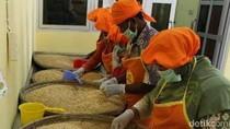 Kurangi Ketergantungan Impor, Kedelai Lokal Dikembangkan di Grobogan