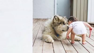 Potret Keakraban Seorang Balita dengan Anjing Besarnya