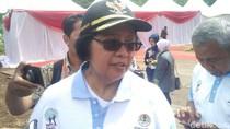 Orangutan Mati Tanpa Kepala, Menteri LHK Utus 2 Dirjen ke Kalteng