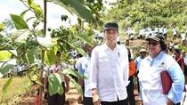 Jokowi: Gerakan Tanam Pohon Jangan Hanya Seremonial