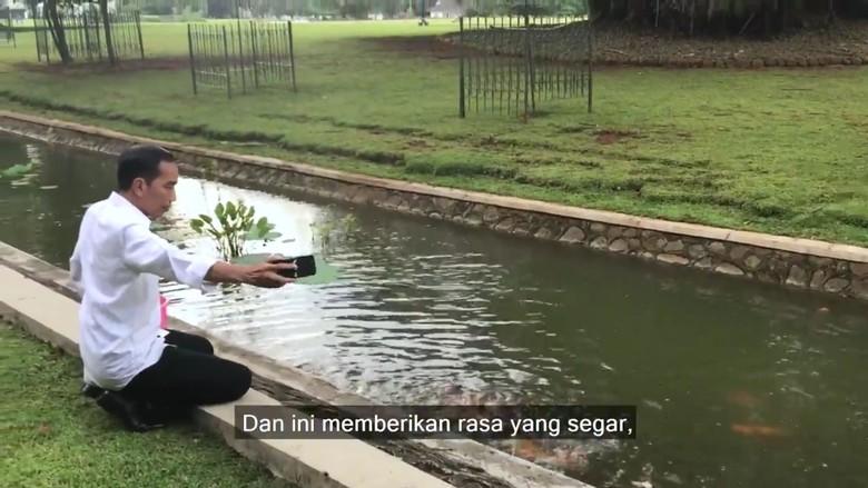 Jokowi Beri Makan Rusa hingga - Jakarta Presiden Joko Widodo bercerita soal aktivitasnya di waktu Jokowi biasanya memanfaatkan waktu luang dengan satwa Istana Kepresidenan