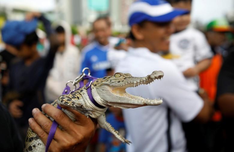 Ada Buaya Eksis saat CFD - Jakarta Gelaran car free day kerap dimanfaatkan warga untuk berolahraga atau aksi terkadang ada pula yang menarik seperti