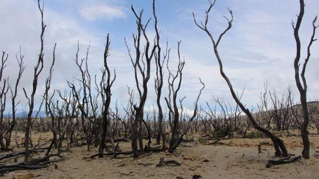 Hutan Mati yang Eksotis