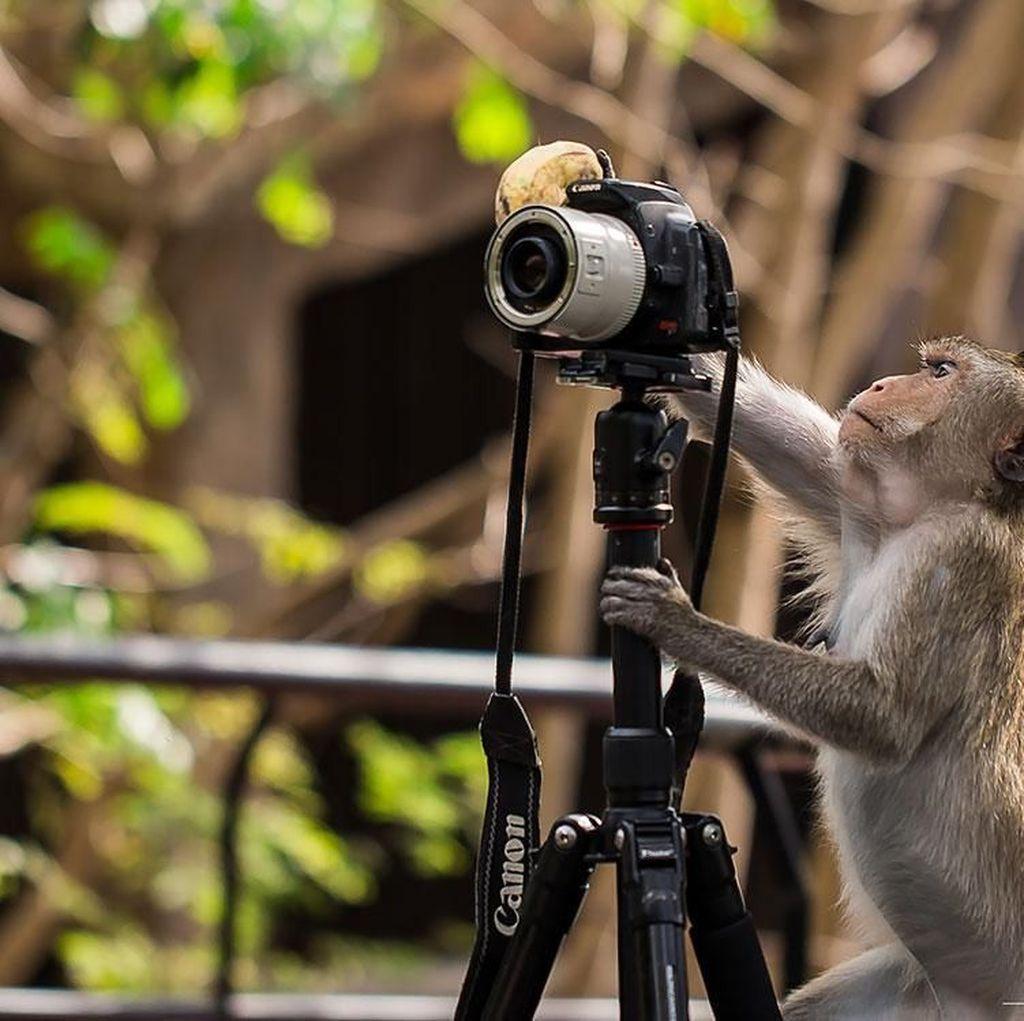 Tingkah Hewan Berprofesi Fotografer Bikin Ngakak