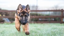 Anjing Lepas dari Kandang, Seisi Bandara Jadi Heboh
