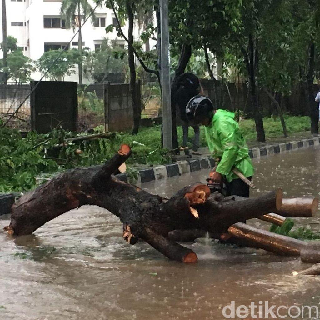 Sandi Sebut Penebangan Pohon Rawan Tumbang Terbentur dengan Komunitas