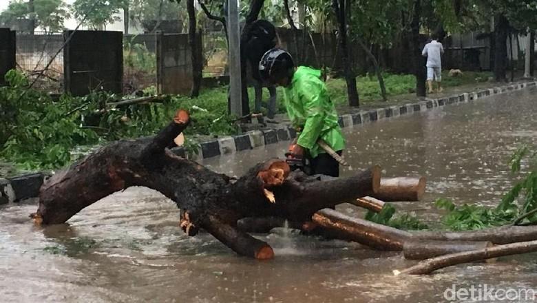 Sandi Sebut Penebangan Pohon Rawan Tumbang Terbentur oleh Komunitas