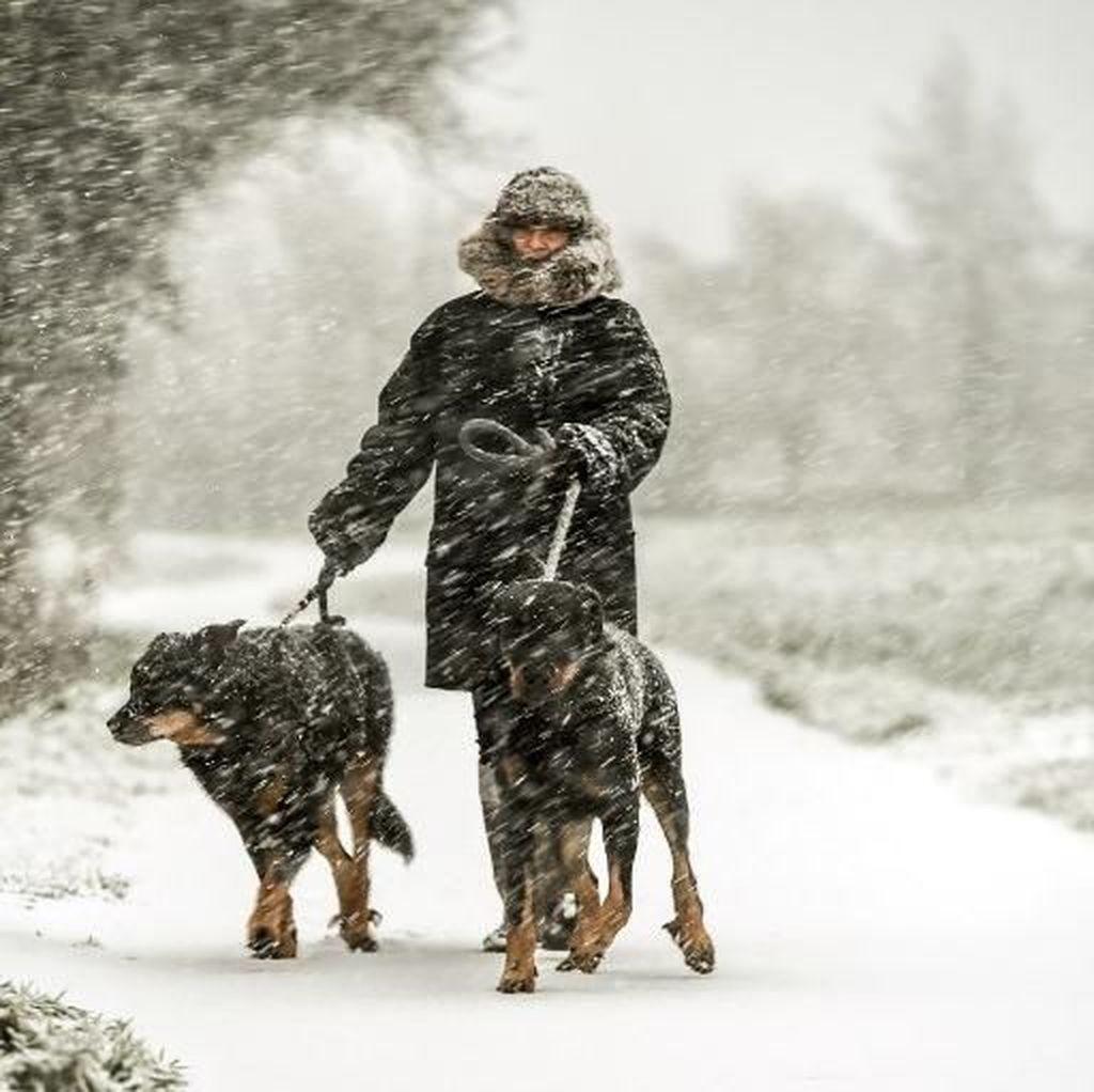 Foto: Salju Tebal Selimuti Eropa, Ratusan Penerbangan Batal