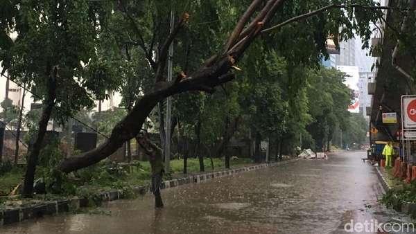 Hujan Deras, Pohon Tumbang di Perempatan Kuningan