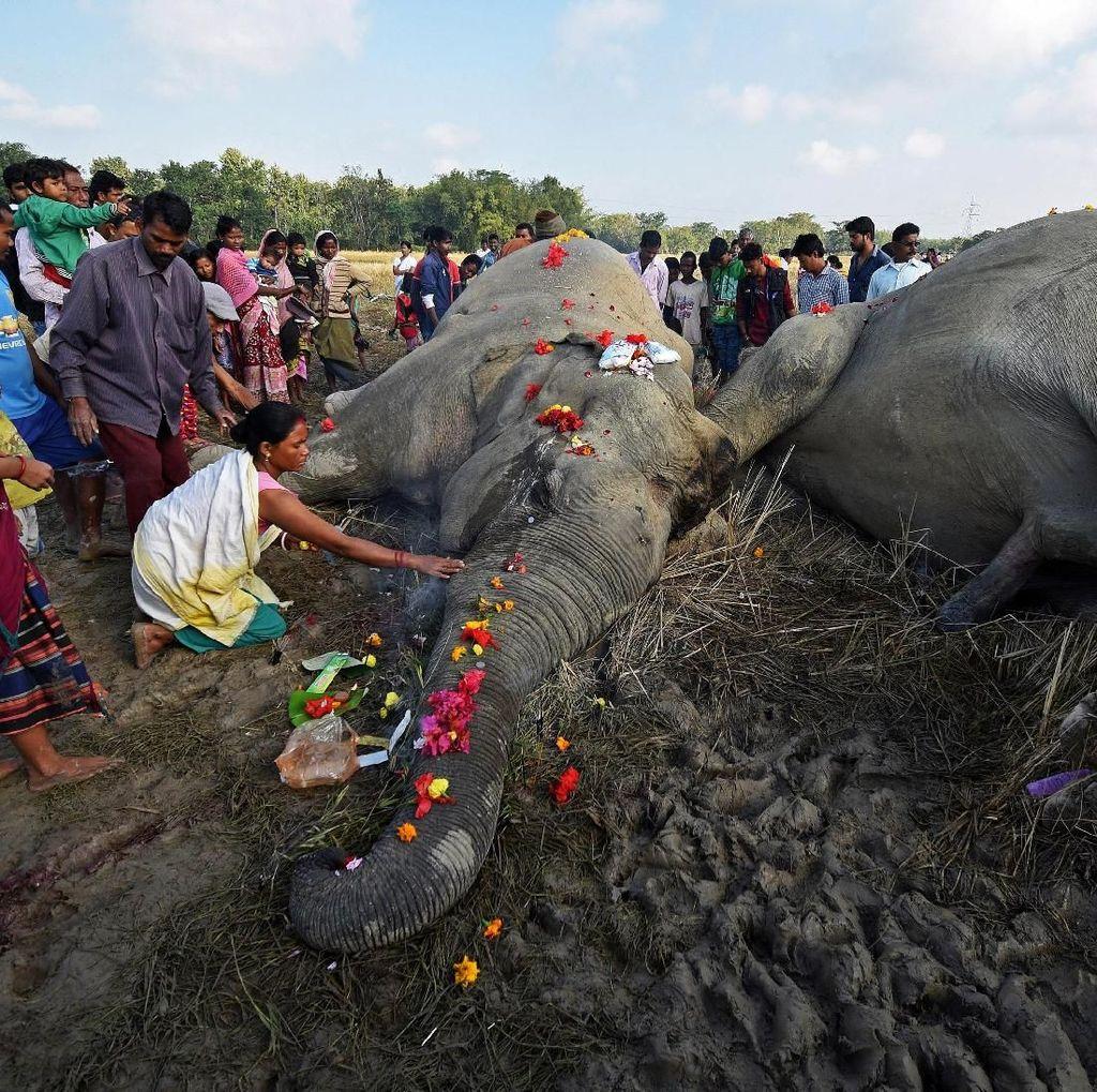 Foto: Momen Sedih Saat Warga Taburkan Bunga Terakhir ke Gajah Mati