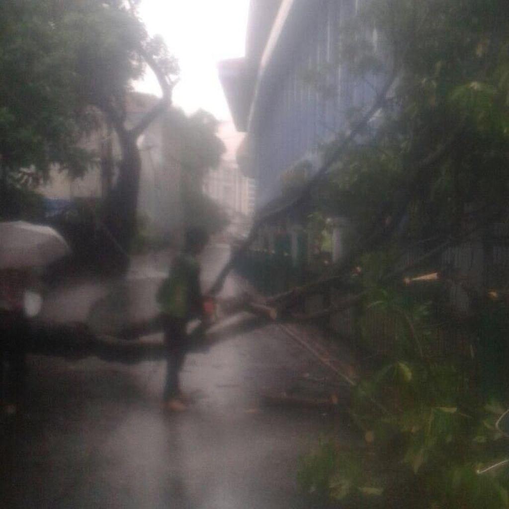 Hujan Lebat Disertai Angin, 2 Pohon Tumbang di Cawang dan Juanda
