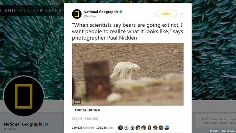 Beruang Kutub Sekarat karena Kelaparan - Ottawa Video yang menunjukkan seekor beruang kutub yang tengah berjalan mencari makanan mengagetkan netizen video yang menunjukkan seekor