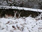 Brrr.. Begini Penampakan Taman Tertutup Salju di Inggris