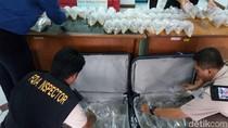 Penyelundupan 21 Ribu Bayi Lobster di Bandara Cengkareng Digagalkan