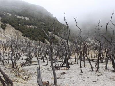 Eksotisme Hutan Mati di Garut