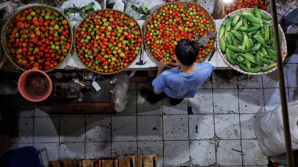 Kesegaran Tomat di Bulan-Bulan Hujan