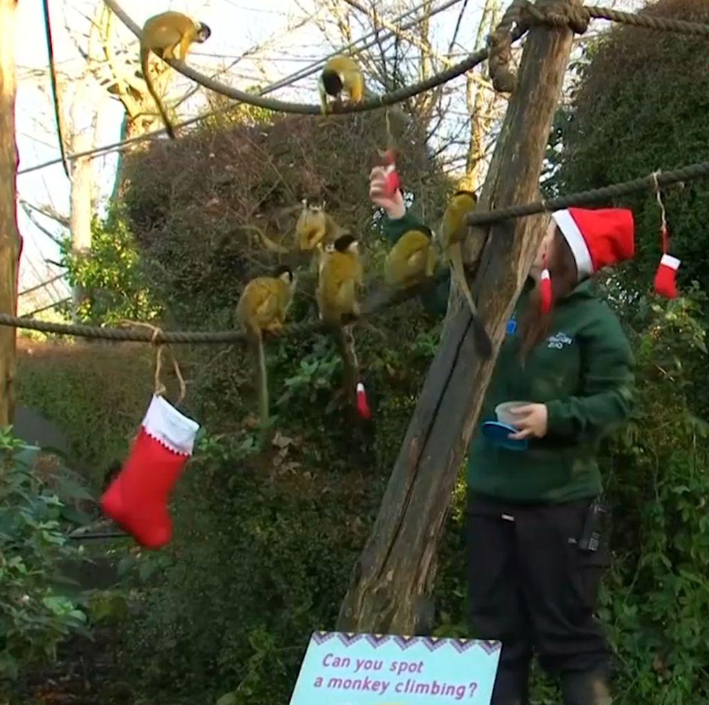 Penghuni Kebun Binatang London Ikut Rayakan Natal