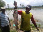 Wuih! Warga Jaring Lele Jumbo di Tengah Banjir Ponorogo