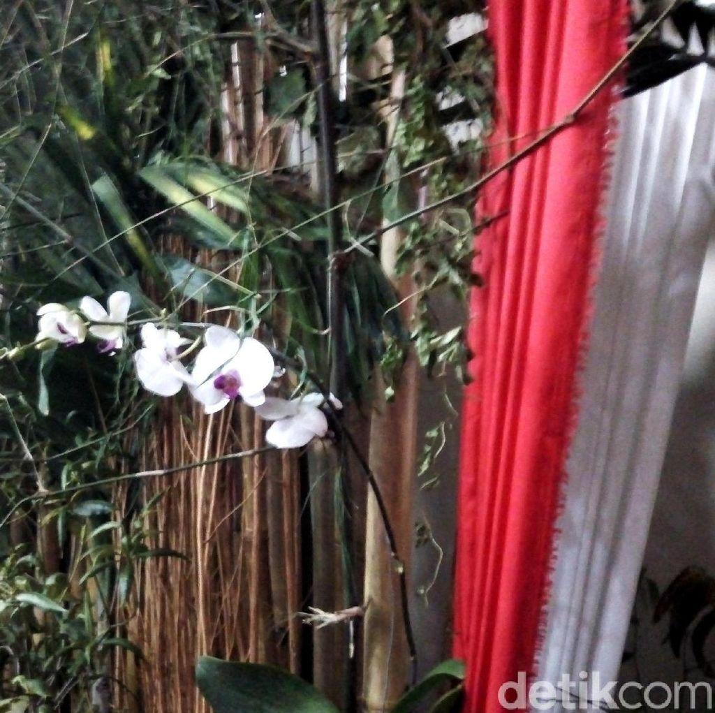 Foto: Tanaman-tanaman Langka di Konferensi Pers Bu Mega