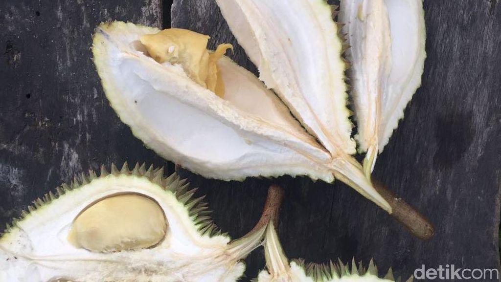 Lezatnya Tiada Dua, Durian Tembaga Asal Siak Riau