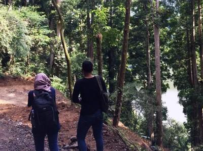 Menjelajahi Hutan Taman Nasional Gunung Gede Pangrango