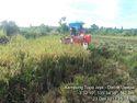 Varietas Padi Inpari 7 Mengubah Mitos Jalur Merah bagi Petani Nabire
