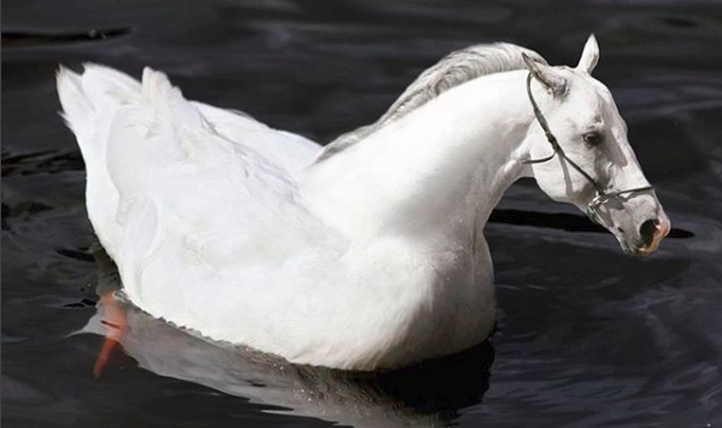 Di setiap hasil photoshop-nya, @gyyporama memberi nama karya kawin silangnya ini. Kalau ini ia beri nama Huck, perkawinan horse (kuda) dan duck (bebek). (Foto: Instagram @gyyporama)