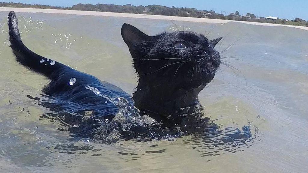 Foto: Lucunya Nathan, Kucing yang Suka Pantai