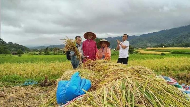 Cara Petani Padang Panjang Bisa Tetap Panen di Musim Hujan