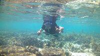 Ini Pulau yang Eksotis di Sulawesi, Coba Tebak?