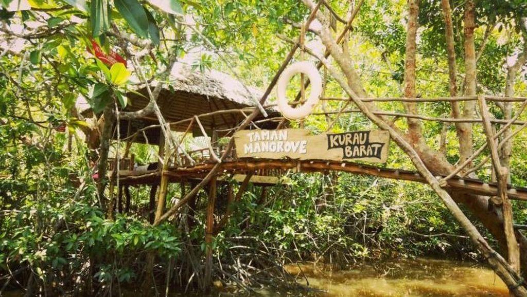 Bangka Juga Punya Hutan Mangrove Kekinian