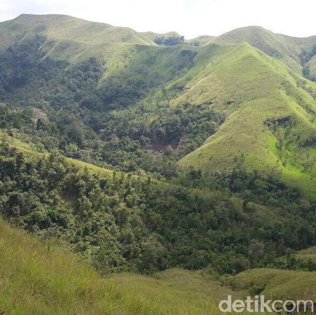 7 Hektare Ladang Ganja di Aceh Dibakar
