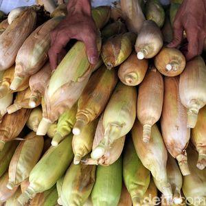 11.500 Ton Jagung NTB Diekspor ke Filipina